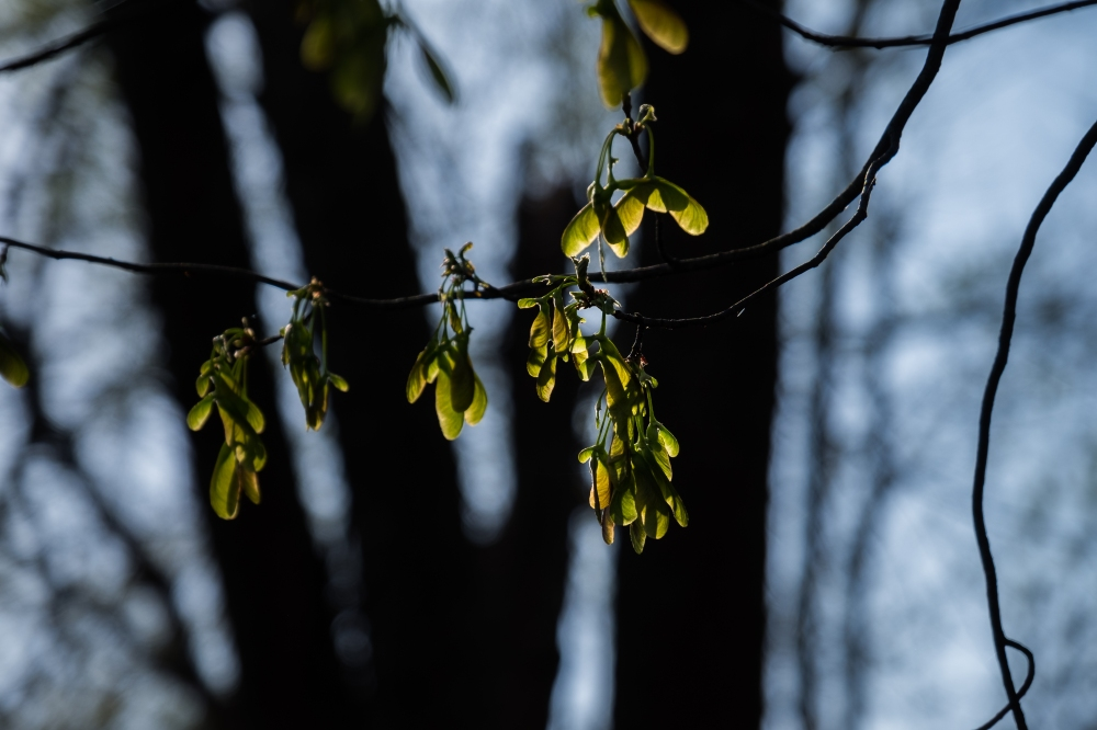 Signs of Spring-4
