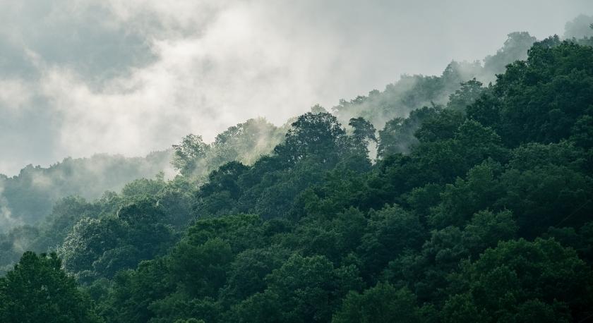 Clouds Fog Bunny